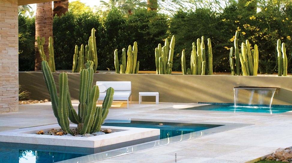 Cactus cachipay y otras suculentas for Arreglo jardines exteriores